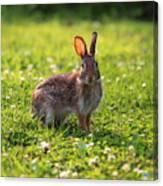 Sunny Bunny Canvas Print