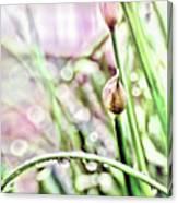 Sunny Rain Canvas Print