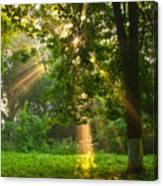 Sunny Rays Canvas Print