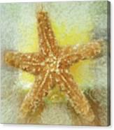Sunny Star Canvas Print