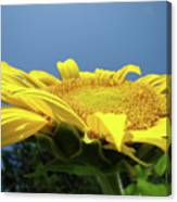 Sunny Summer Sunflowers Floral Art Baslee Troutman Canvas Print