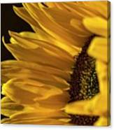 Sunny Too By Mike-hope Canvas Print