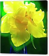 Sunny Tulip In Vase. Canvas Print