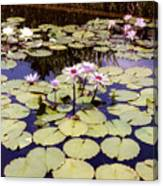 Sunny Waterlilies Canvas Print