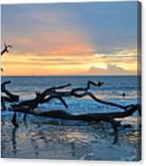 Sunrise At Driftwood Beach 1.4 Canvas Print