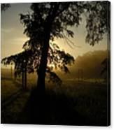 Sunrise Behind Elm Tree Canvas Print
