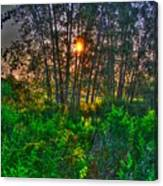 Sunrise In The Swamp-4 Canvas Print