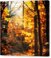 Sunrise Mist Through The Trees Canvas Print