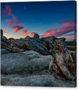 Sunrise On The Jeffrey Pine Canvas Print