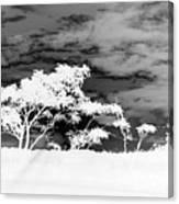 Sunrise Over Fort Salonga B W In Negative Canvas Print