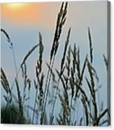 Sunrise Over Grass Canvas Print