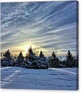 Sunrise Pines Canvas Print