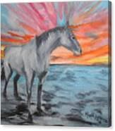 Sunrise Pony Canvas Print