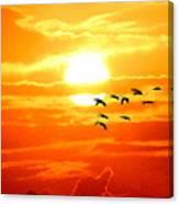 Sunrise / Sunset / Sandhill Cranes Canvas Print