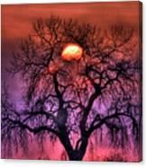 Sunrise Through The Foggy Tree Canvas Print