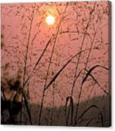 Sunrise Through The Tall Grass Canvas Print