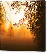 Sunrise Trees Fog Canvas Print