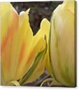 Sunrise Tulips Canvas Print