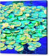 Sunrise Waterlilies Canvas Print