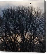 Sunrise With Bird Canvas Print