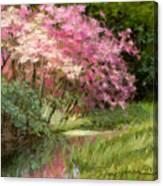 Sun's Grace Canvas Print