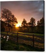 Sunset And Daffodills Canvas Print
