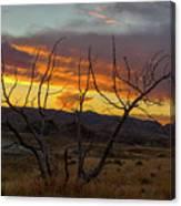 Sunset And Petrified Tree Canvas Print