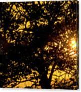 Sunset And Trees - San Salvador I Canvas Print