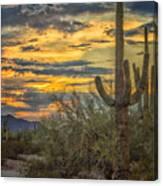 Sunset Approaches - Arizona Sonoran Desert Canvas Print