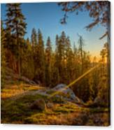 Sunset At Sequoia Canvas Print