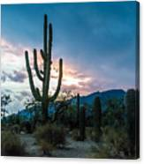 Sunset Beyond The Cacti Canvas Print