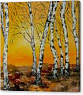 Sunset Birches Canvas Print
