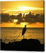 Sunset Bird Canvas Print