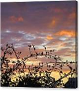 Sunset Colors To The West Canvas Print