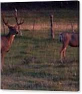 Sunset Deer II Canvas Print
