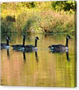 Sunset Goose Canvas Print