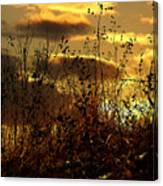 Sunset Grasses Canvas Print