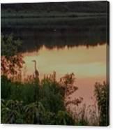 Sunset Heron Canvas Print