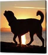 Sunset Howl Canvas Print