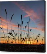 Sunset In The Weeds Canvas Print