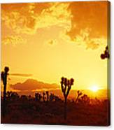 Sunset, Joshua Tree Park, California Canvas Print