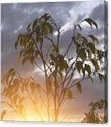Sunset Leaves 2 Canvas Print