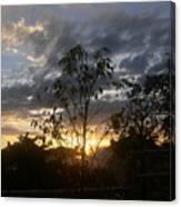 Sunset Leaves 5 Canvas Print