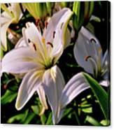 Sunset Lilies Canvas Print
