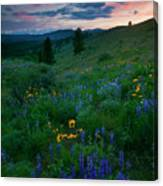 Sunset Meadow Trail Canvas Print