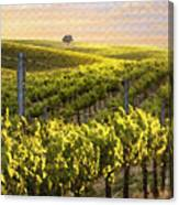 Sunset On A Vineyard Canvas Print