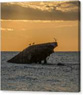 Sunset On The Wreck Of The Concrete Ship Atlantus Canvas Print