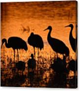 Sunset Reflections Of Cranes And Geese Canvas Print