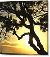 Sunset Revival Canvas Print