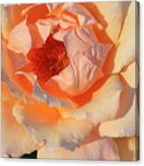 Sunset Rose Canvas Print